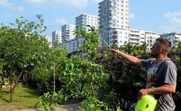 Varsovie (AFP). A Varsovie, les jardins familiaux résistent aux promoteurs immobiliers