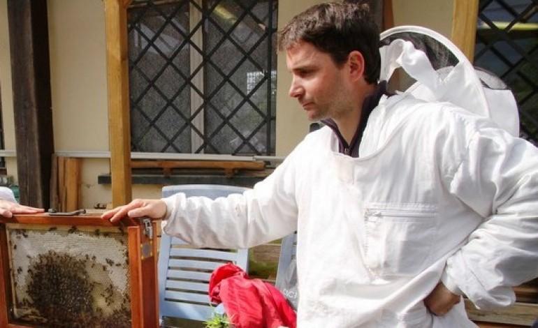 Frelons asiatiques : inquiets, les apiculteurs du Calvados lancent un plan de lutte