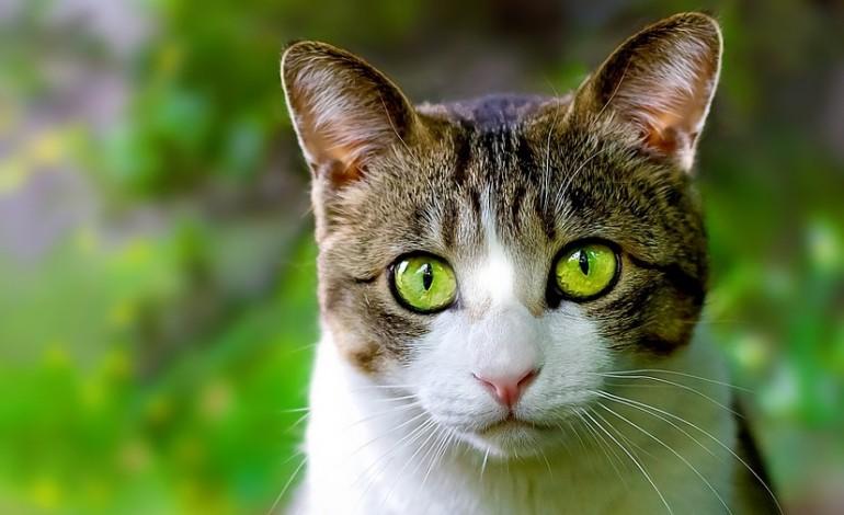 une entreprise du calvados veut vendre son alimentation pour chats en iran. Black Bedroom Furniture Sets. Home Design Ideas