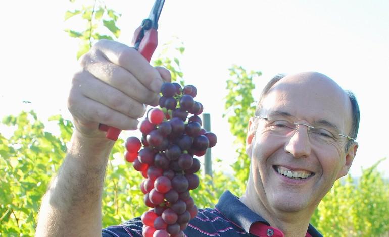 Près de Saint-Pierre-sur-Dives, on produit du vin normand
