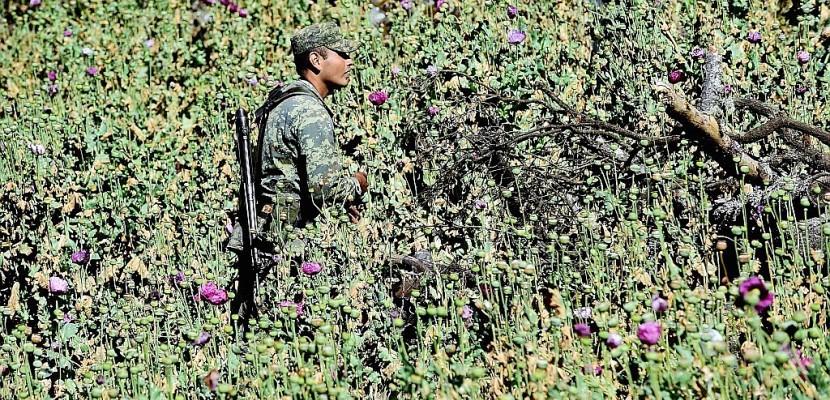 Au Mexique, l'armée en lutte pour éradiquer le pavot à opium