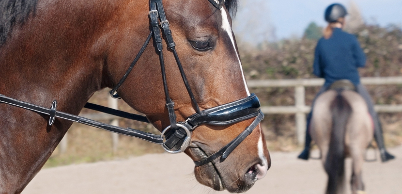 centre equestre rouen
