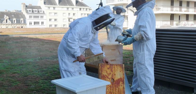 apiculteur rousset