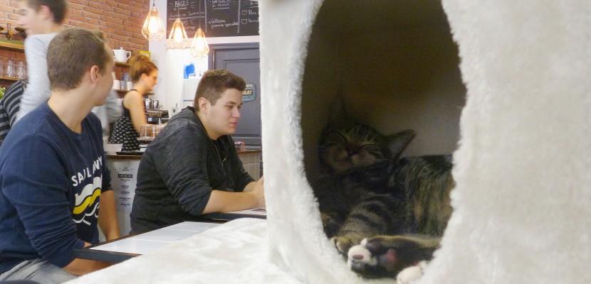 une petite pause au caf moustache le premier bar chats de rouen. Black Bedroom Furniture Sets. Home Design Ideas