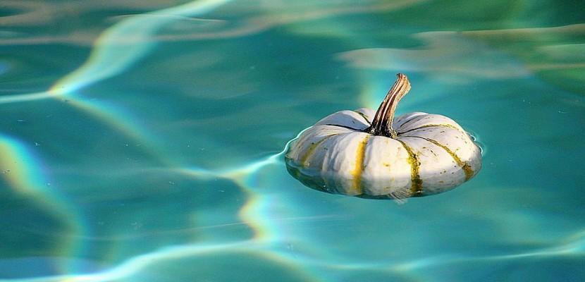F tez halloween au centre aquatique d 39 argentan for Piscine argentan
