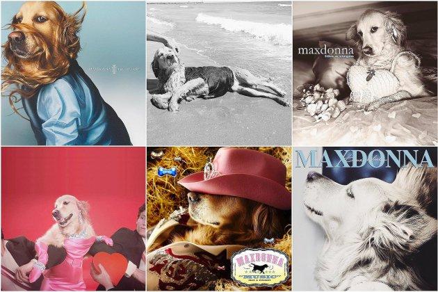 Maxdonna, le sosie canin de Madonna
