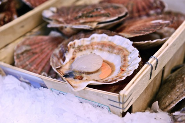 Dieppe. Coquille Saint-Jacques : pas d'accord entre pêcheurs français et britanniques