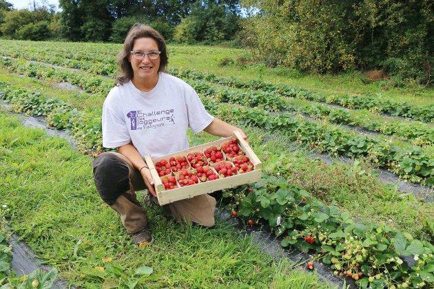 Près de Cherbourg, venez cueillir… les fraises d'automne!