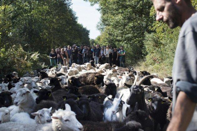 Après la lutte contre l'aéroport, les zadistes défendent une agriculture différente