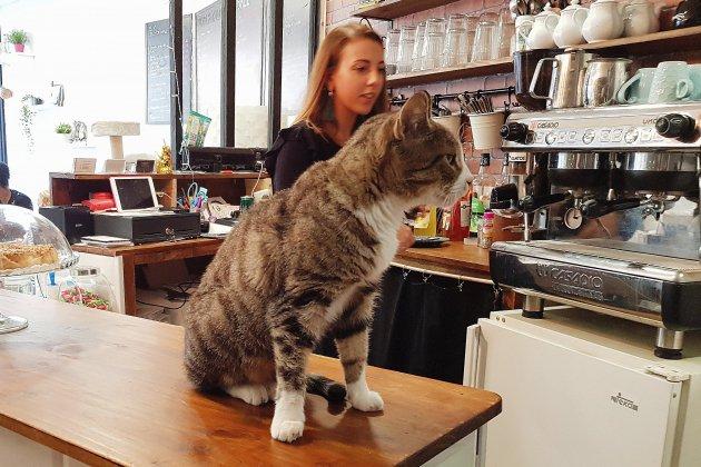 Rouen : en un an, le Café Moustache a fait de nombreux chats heureux