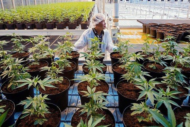 Le Canada légalise le cannabis dans l'euphorie