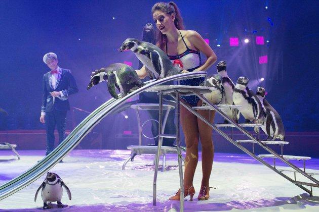 Le cirque Arlette Gruss fête les étoiles du cirque à Rouen