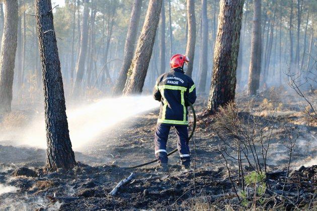 [photos] Incendie dans la Manche : 40 hectares de pinèdeont brûlé