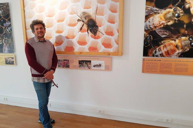La vie des abeilles au Muséum du Havre