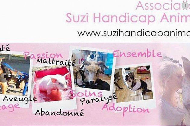 Normandie: un généreux mécène sauve le refuge Suzi Handicap Animal