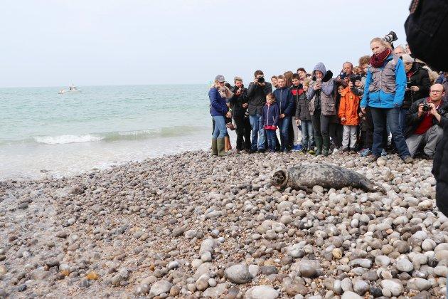 Fécamp: Muno et Selki ont retrouvé la mer