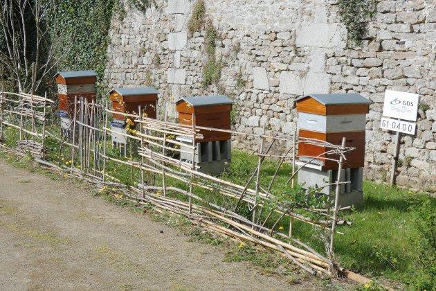 Des ruches au Conseil départemental de l'Orne