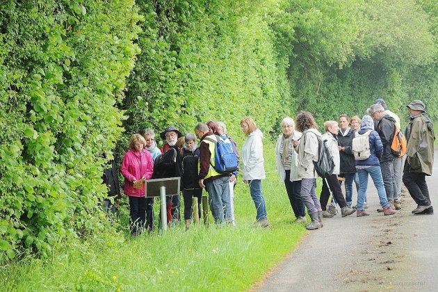 Fête de la rando dans l'Orne: nouveaux clous pour le Mont Saint Michel