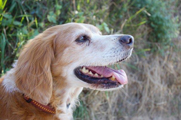 Ferrières-en-Bray. Seine-Maritime: un chien décède après avoir été traîné d'une voiture