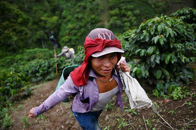 Le refuge précaire d'indigènes transgenres parmi les caféiers de Colombie