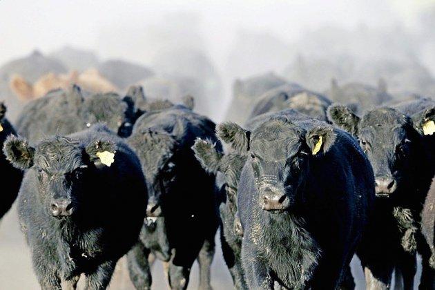 """Accord UE-Mercosur: """"jour funeste"""" pour les agriculteurs et les écologistes"""