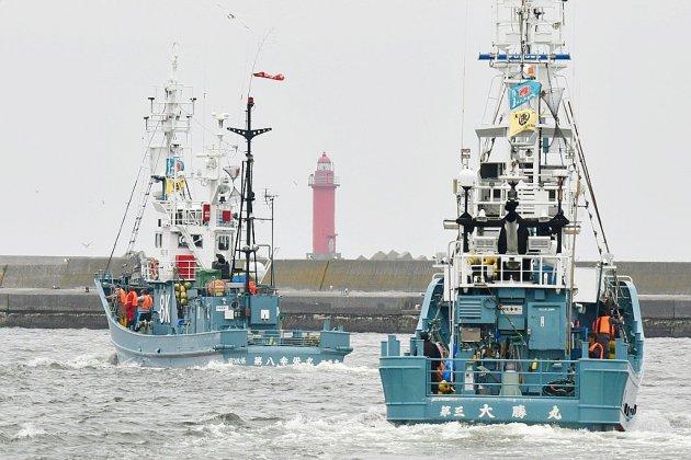 Les baleiniers du Japon relancent la chasse commerciale après une longue pause