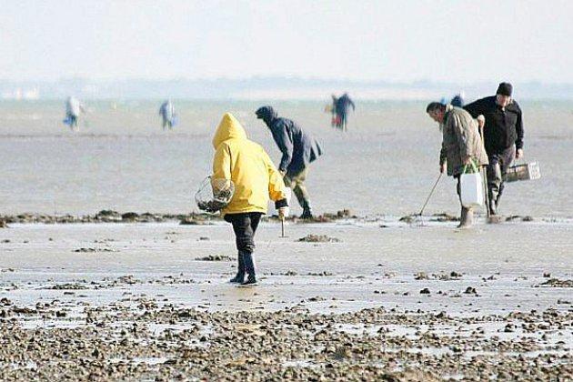 La pêche de coquillages filtreurs interdite en Seine-Maritime