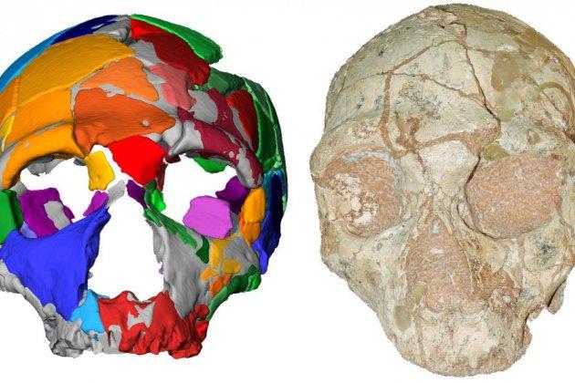 Eurêka! Le plus vieil Homo sapiens non africain a été retrouvé