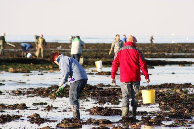 Ouistreham: la pêche aux moules de nouveau autorisée