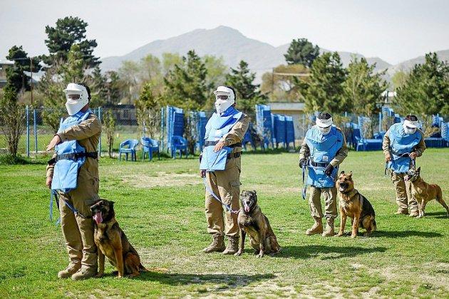 En Afghanistan, le meilleur ami de l'homme est un chien renifleur d'explosifs