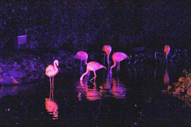 Insolite : le zoo de Jurques propose des visites nocturnes