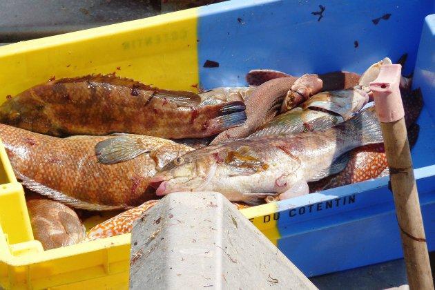 La pêche électrique interdite en France et en Normandie