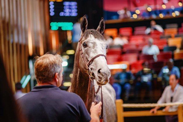 Course hippique : à Deauville, 338 jeunes chevaux aux enchères