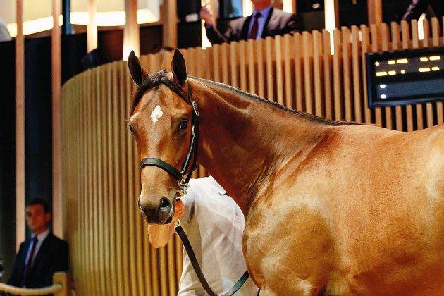 Chevaux de course : un yearling vendu 800 000 euros à Deauville