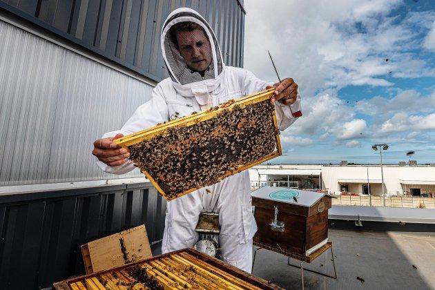 Cherbourg: 60 000 abeilles sur le toit du Petit Vapoteur