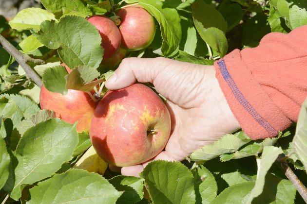 Une journée pour ma pommeau PNR des Boucles de la Seine normande