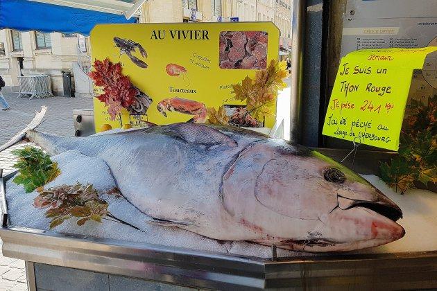 Manche: un thon rouge de 241 kg pêché au large de Cherbourg