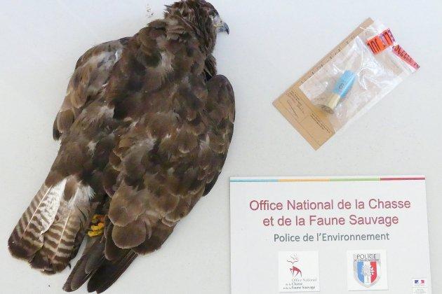 Destruction de rapaces : un homme encourt 3 ans de prison dans le Calvados
