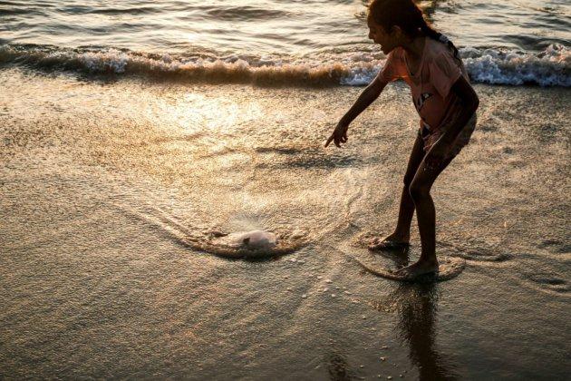 Les méduses, gagnantes du bouleversement des océans