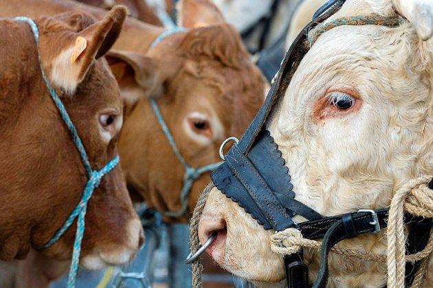 """Taxes sur le fromage, Ceta et sécheresse: """"est-ce qu'on veut encore des paysans?"""""""