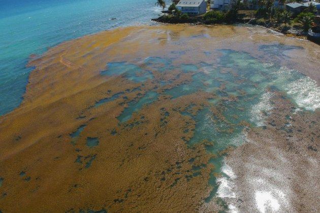 En Guadeloupe, l'enfer de vivre avec les sargasses