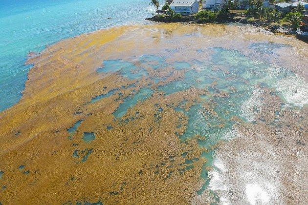 Philippe en Guadeloupe pour amplifier la lutte contre les sargasses