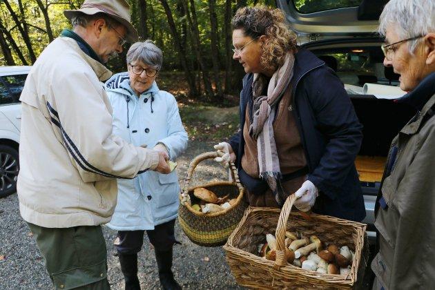 La cueillette de champignons bat son plein