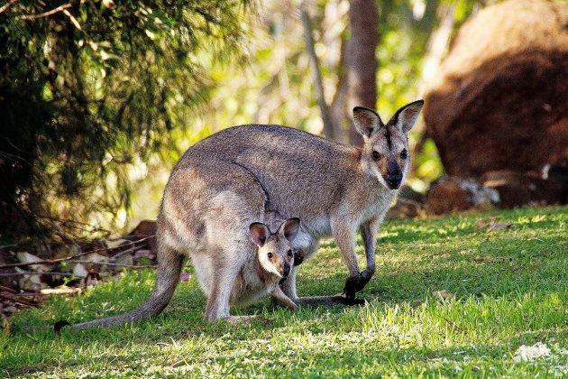 Un vide-dressing au zoo pour aider l'Australie face aux incendies