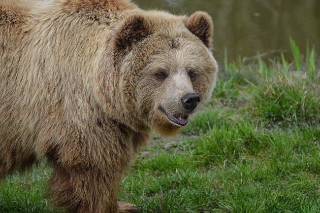 Un garçon suivi par un ours a une incroyable réaction