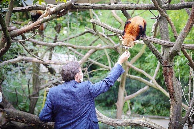 Le bébé panda roux du Parc de Clères a un nom!