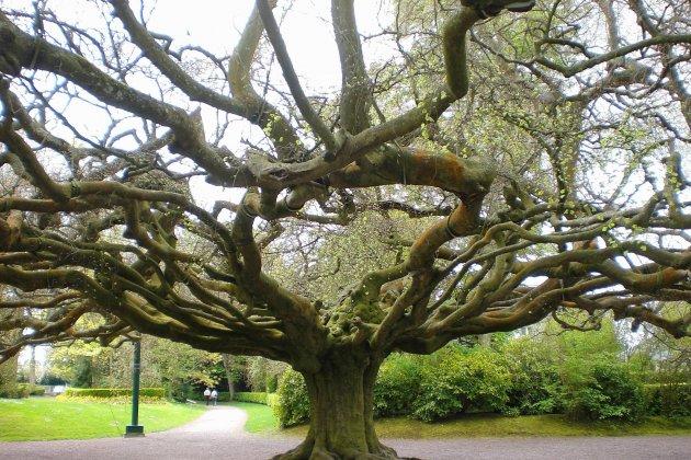 Bayeux ferme les portes du jardin botanique
