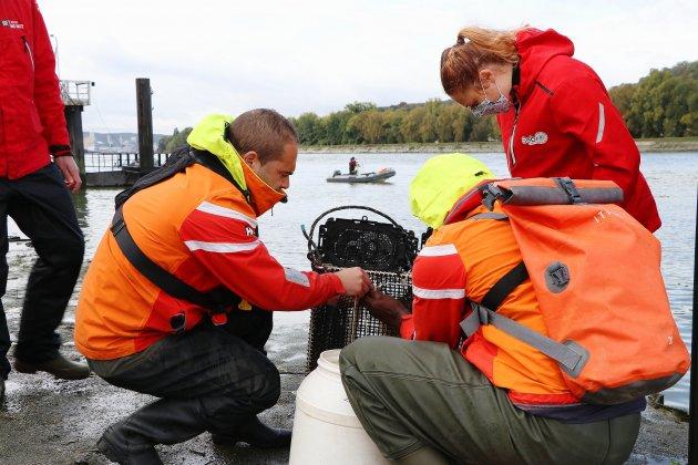 [Vidéo] Seine-Maritime. Une nouvelle étude sur le vivant pour mesurer la qualité de l'eau de la Seine