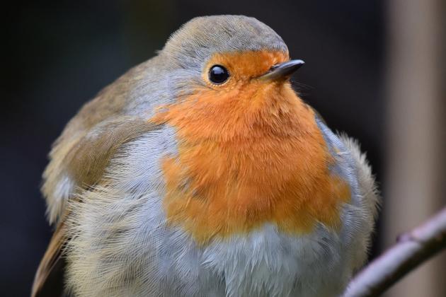 """Qui sont les oiseaux """"stars"""" de nos jardins ?"""