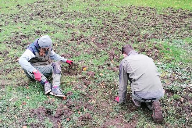 Les pelouses du château du Taillis retournées par des sangliers